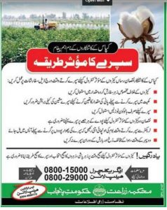 Cotton Crop Spray Treatment In Urdu