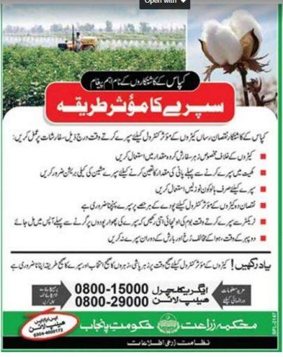 Cotton Crop Spray Treatment In Urdu