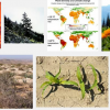 The Impact of Climate Change On Plants Essay Hints For Students