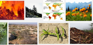 impact-of-climate-change-on-plants