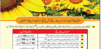 January And feburary are only months for Sunflower Production In Pakistan
